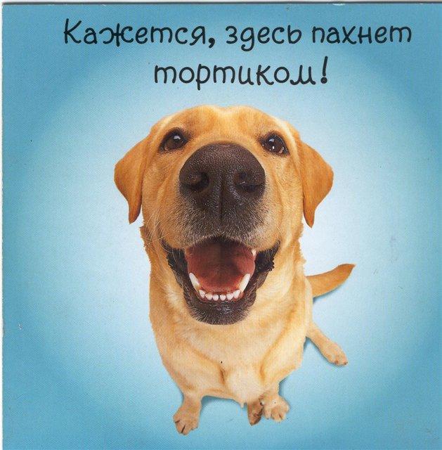 Картинки поздравления с днем рождения собаку