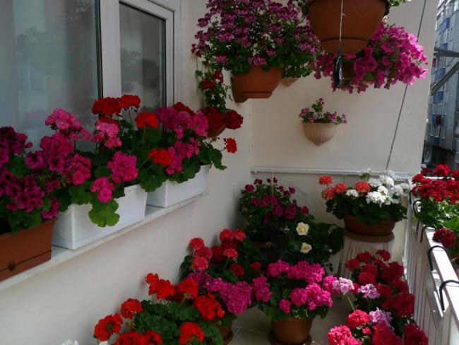 Цветущий балкон форум. - дизайны балконов - каталог статей -.