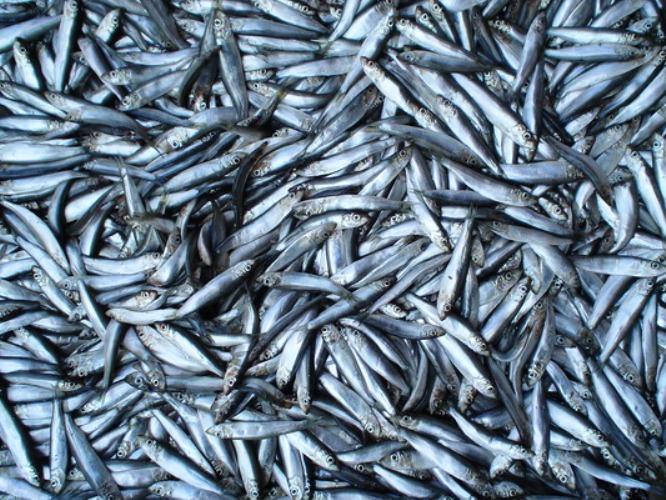 """На пропускном пункте """"Джанкой"""" в Крыму задержали 17 тонн рыбы :: Imenno.ru"""