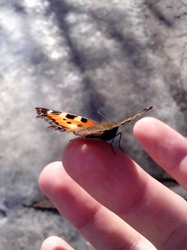 Номера ночных бабочек в чебоксарах 15