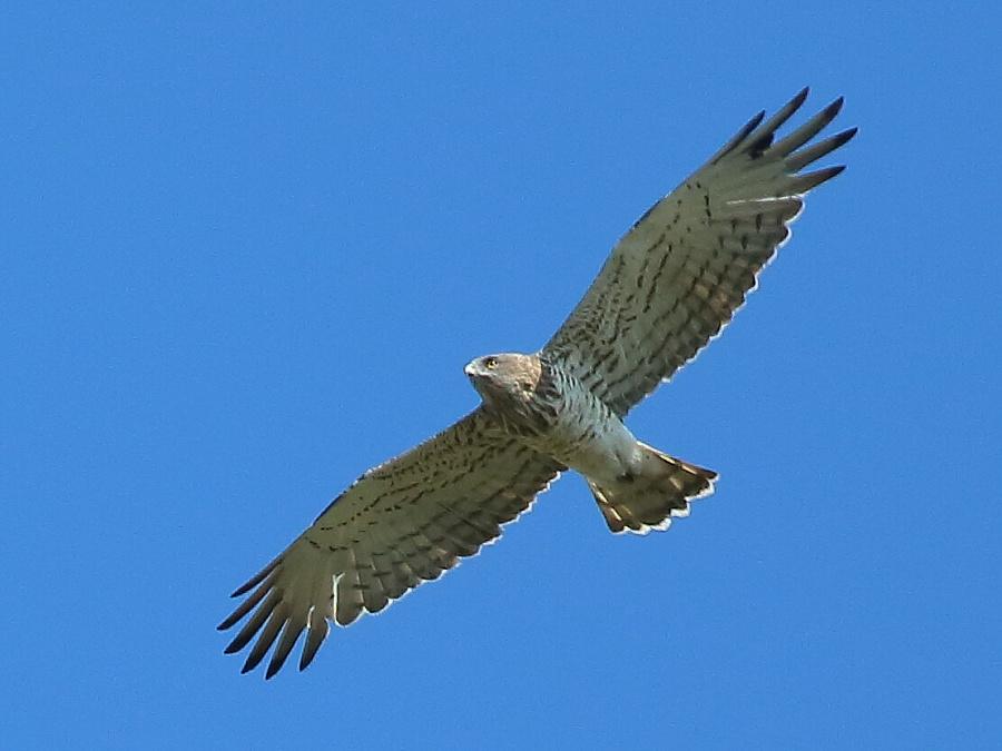 как скопировать фотографии хищных птиц они на
