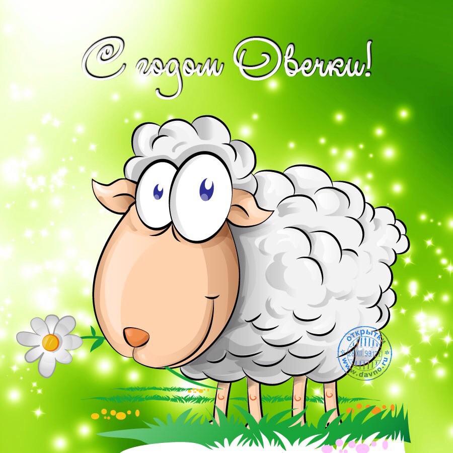 Новых впечатлений, открытки с овечкой