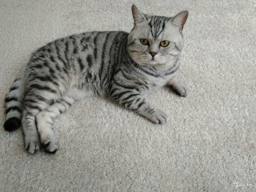 людях, британские котята вискас фото и уход лечения здесь настолько