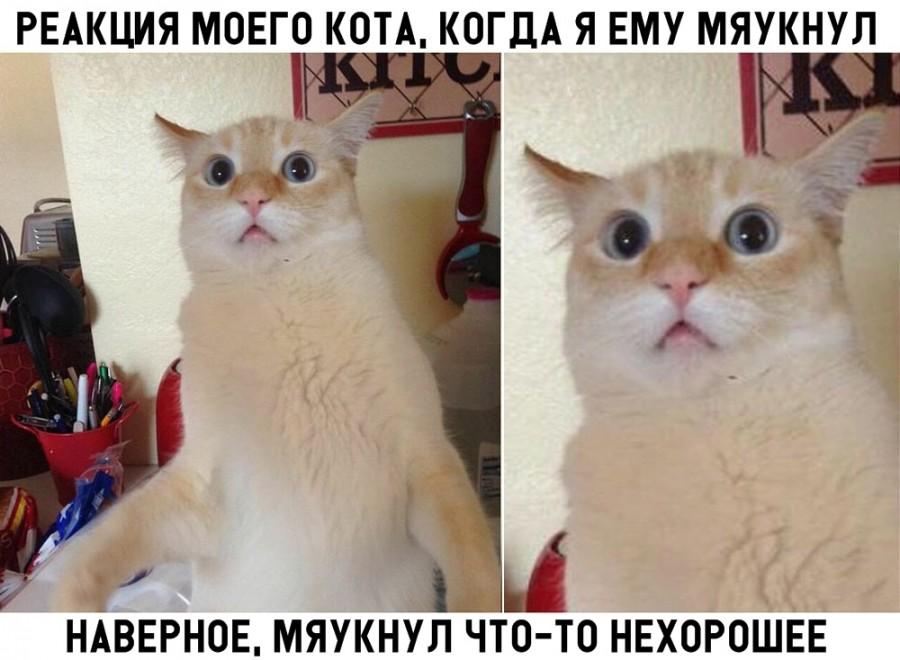 post-98638-1537209397-1082_thumb.jpg