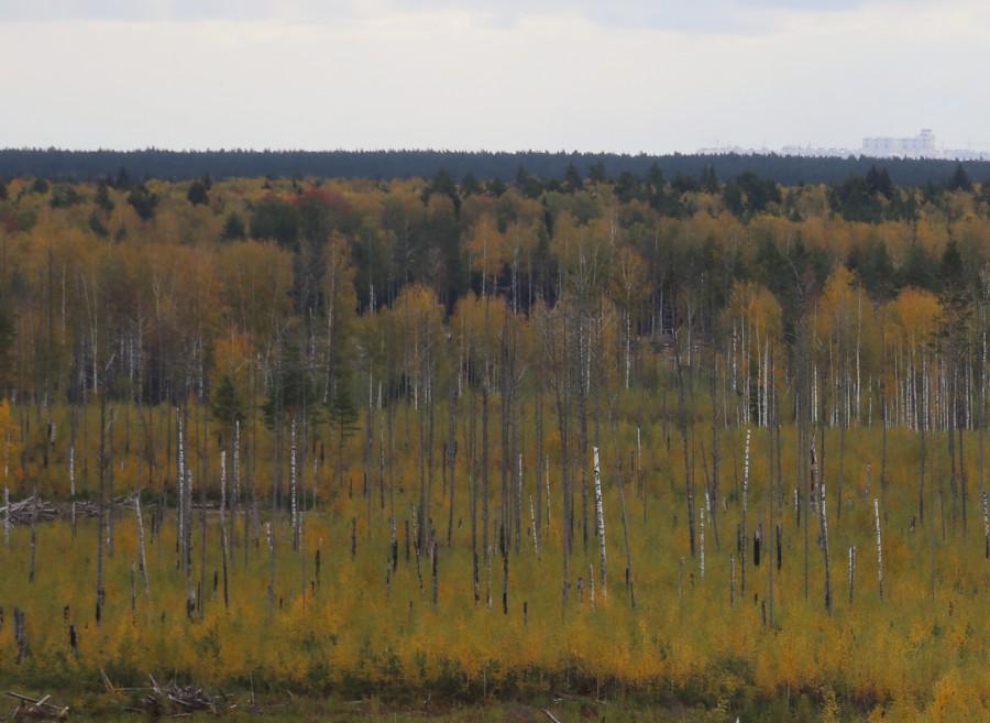 дорогого фотографии в заволжских лесах пирог формируется маленьких