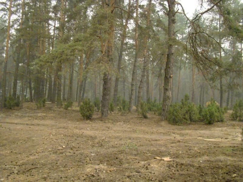 Лес после подготовки