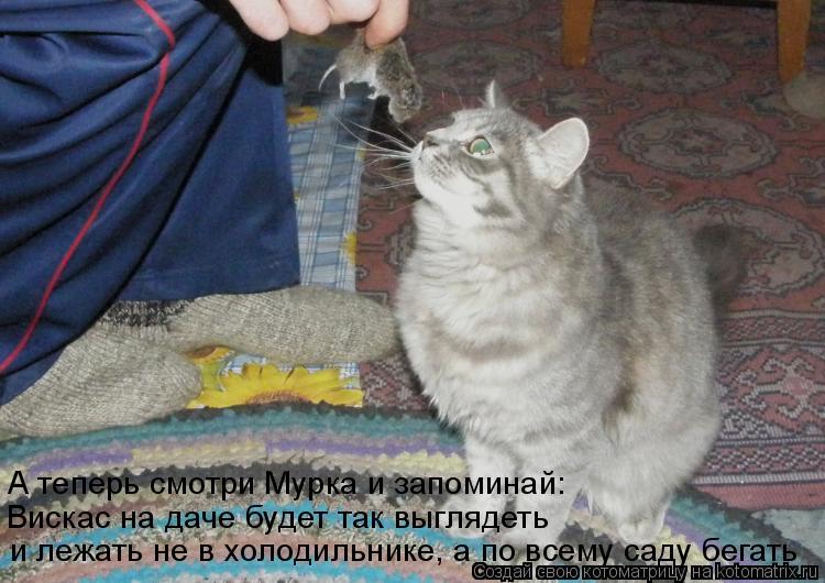 Прикольные картинки кошек с подписями, дню мчс картинка