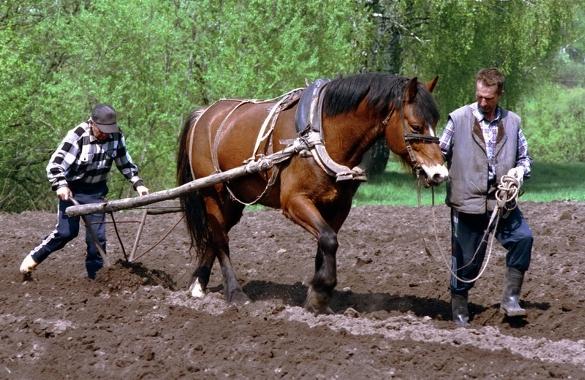Плуг для коня своими руками