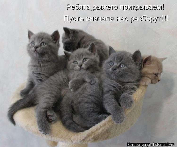 Фотки про котят смешные с надписями