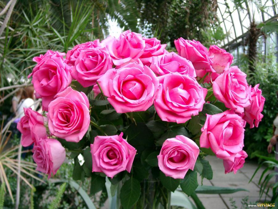 С добрым утром цветы картинки 3