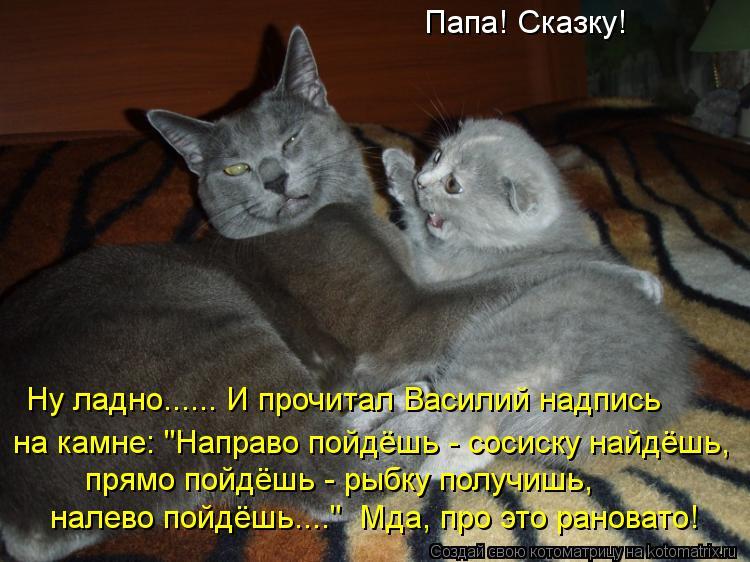 Картинки со смешными надписями про кошек, именинником мужа день