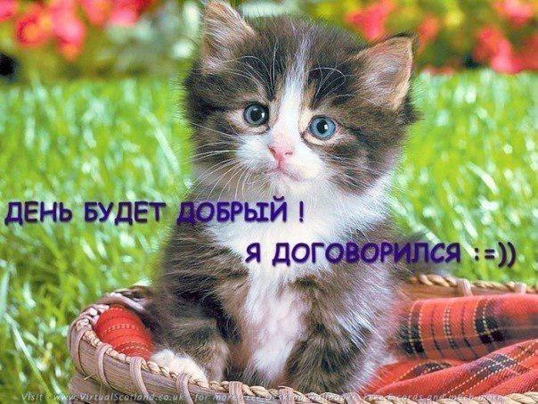 Скачать бесплатно картинку на телефон Животные, Кошки (Коты, Котики).